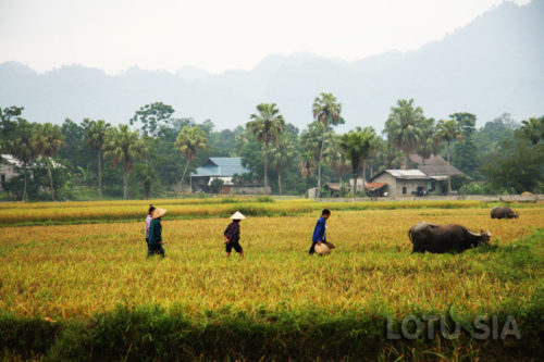 Off The Beaten Track Northern Vietnam Trekking 8 Days