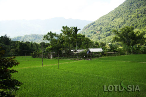 Best 7 Day Trek Mai Chau Adventures