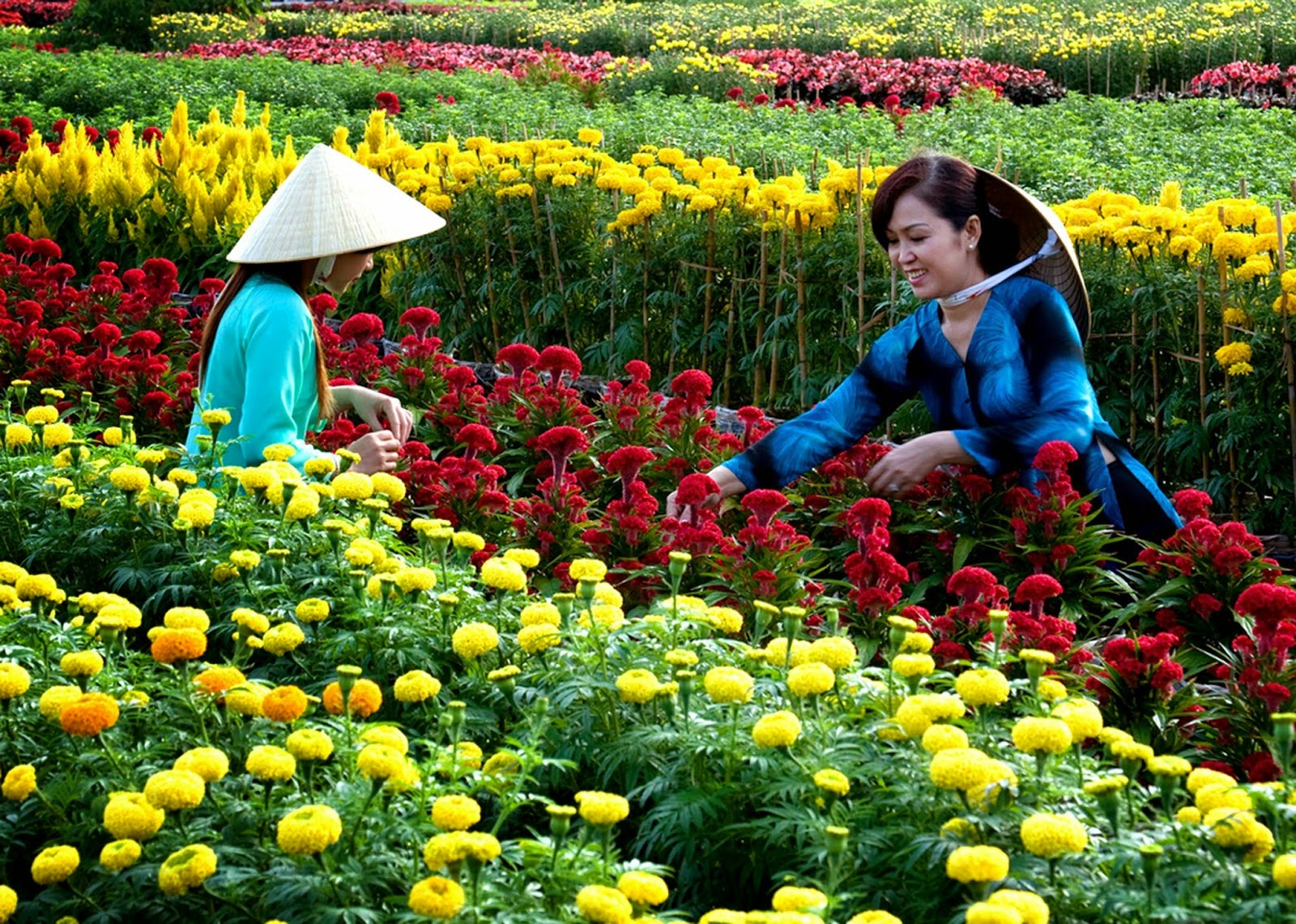 cai mon orchard village ben tre, flower