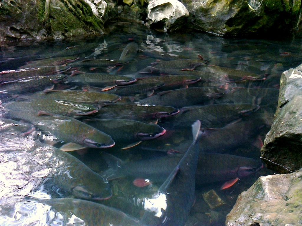 thanh hoa cam luong fish stream